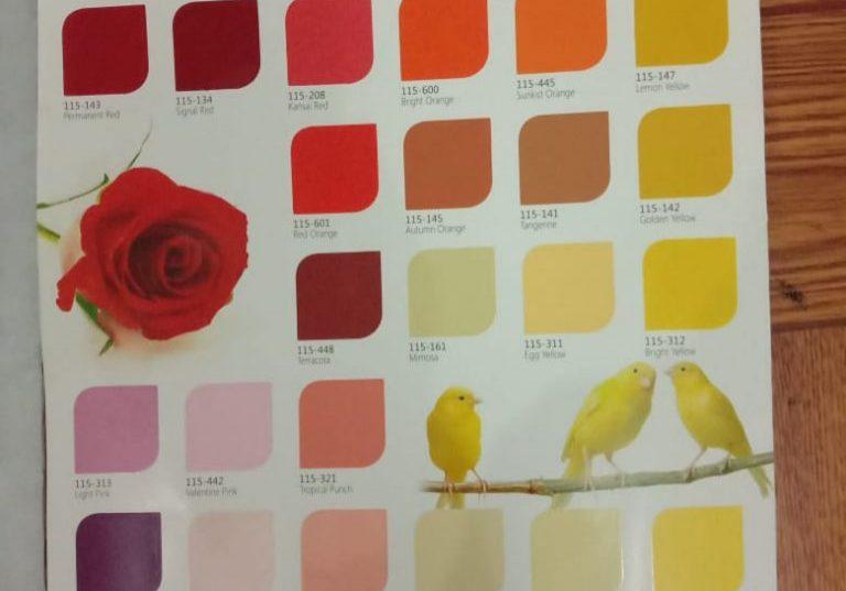 contoh warna